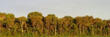 trees in the Amazon