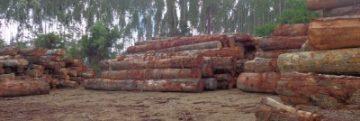 pátio-de-estocagem-da-madeira-retirada-da-área-onde-extrativistas-realizaram-o-empate-400x250