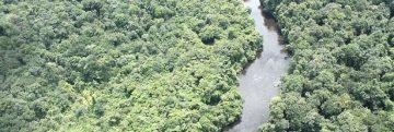 19nov2015---muito-se-fala-sobre-os-efeitos-do-desmatamento-da-amazonia-sobre-o-ecossistema-ou-o-clima-como-um-todo-mas-pouco-se-sabe-sobre-o-impacto-em-especies-especificas-1447967486176_615x300