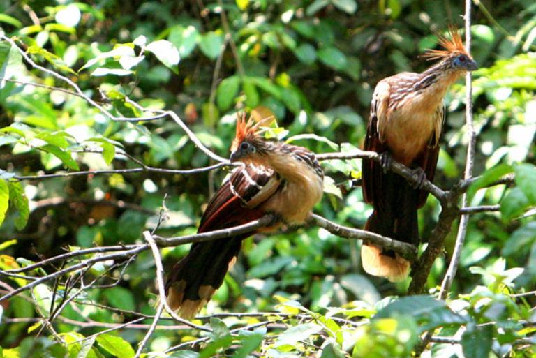 Vida silvestre en el Parque Nacional Yasuní. Foto por Jeremy Hance