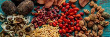 sementes amazonicas