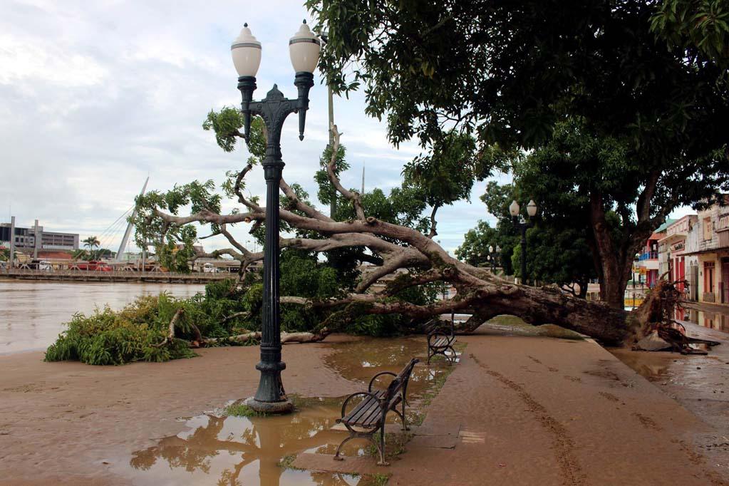 Árvore e lama nas ruas após cheia histórica de 2015 no Acre