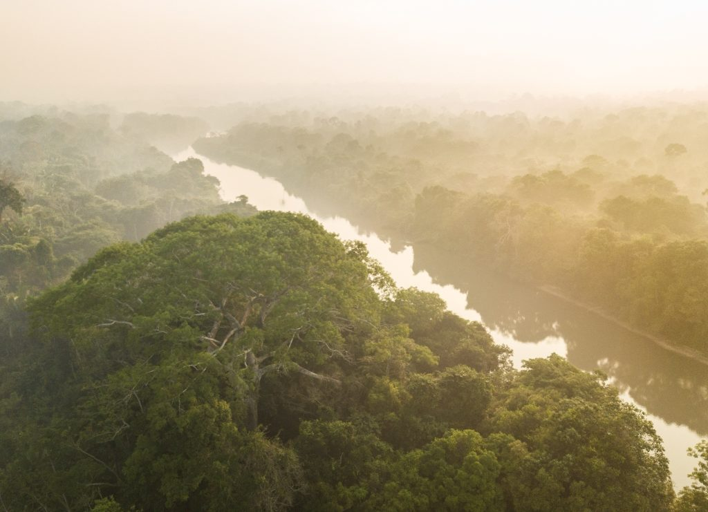 A clear river cuts through a lush forest landscape. The air is shrouded in fog.
