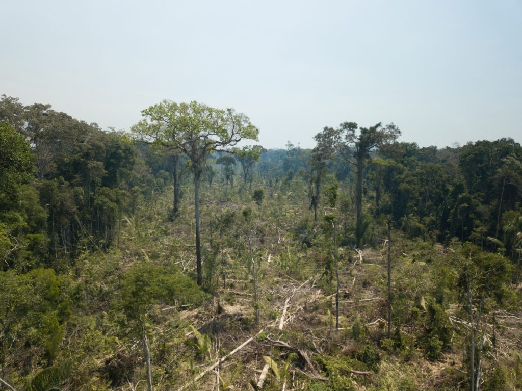 A forest in Karipuna with many missing trees.
