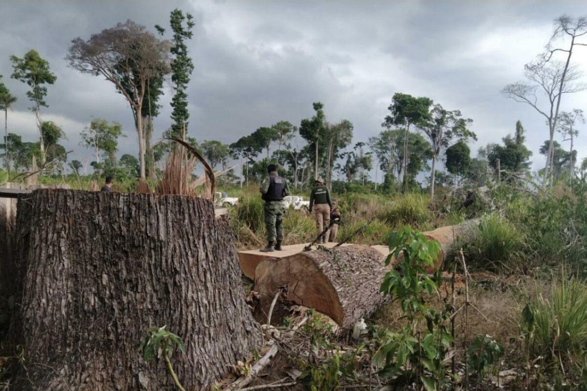 Agência Pará