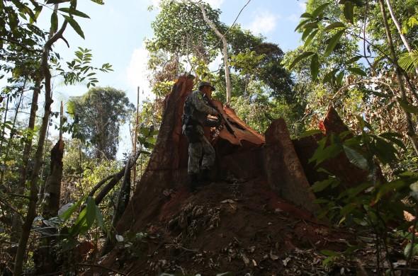 Amazonia-June-13-MR4A2358-e1383948975776