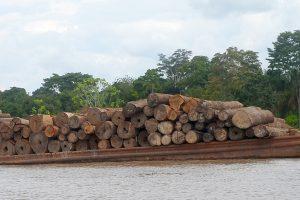 0417Peru-Logging_Photo2