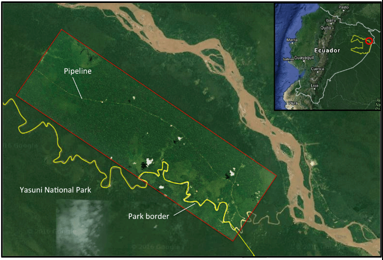 A high resolution (3 meters) of the drilling platform and pipeline in the ITT block of Yasuni from September 2016, overlaid on Google Earth imagery from 2007. This platform lies just outside the Yasuni National Park, but future platforms will move inside the park. Image by: Planet with analysis by MAAP and Google Earth Imagery